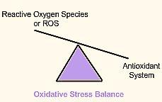 Oxidative stress balance
