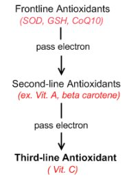 Antioxidant chain of action